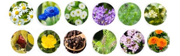 12種高保濕植物萃取成分
