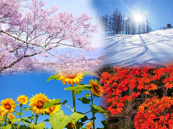 因季節的影響而形成的「季節性油肌」