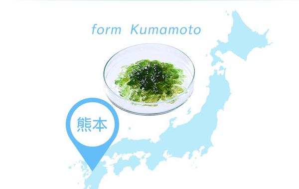 日本神聖藻